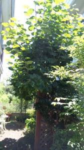 Dvc00620